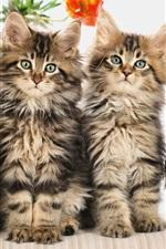 Aperçu iPhone fond d'écranQuatre chats mignons