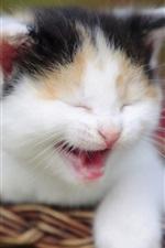 iPhone fondos de pantalla Kitten bostezos cesta