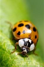 Macro insect green leaf ladybug
