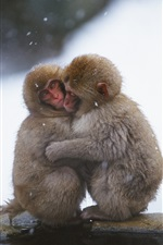 Preview iPhone wallpaper Monkeys embrace heating in the cold winter