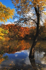 Preview iPhone wallpaper Nature autumn trees lake