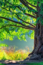 Preview iPhone wallpaper Nature spring green tree forest