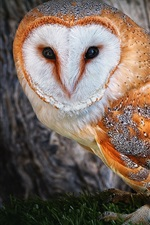 Preview iPhone wallpaper Owl golden feathers