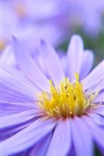 Preview iPhone wallpaper Purple flower petals macro