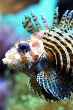Preview iPhone wallpaper Shallow water of tropical fish