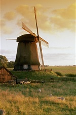 Preview iPhone wallpaper The windmill in autumn