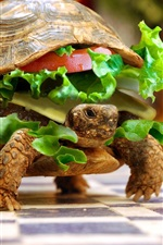 Preview iPhone wallpaper Turtle food creative images