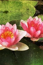 Preview iPhone wallpaper Water lily flower pattern