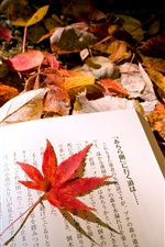 Preview iPhone wallpaper Autumn leaves Japanese book