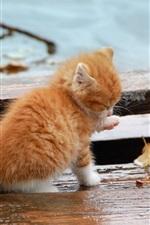 Preview iPhone wallpaper Autumn orange kitten