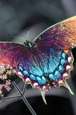 Preview iPhone wallpaper Beautiful colorful butterfly