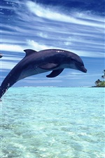 Preview iPhone wallpaper Cheerful dolphins in the sea