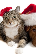 Preview iPhone wallpaper Christmas cat and dog