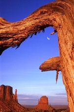 Preview iPhone wallpaper Desert rock dry tree in USA