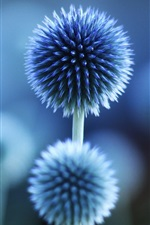 Preview iPhone wallpaper Flower plant blue mood