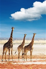 Preview iPhone wallpaper Giraffes sky