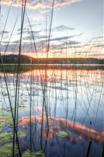 Preview iPhone wallpaper Reeds lake of sky