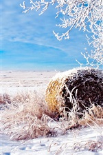 Preview iPhone wallpaper The snow of winter wheat fields