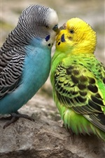 Preview iPhone wallpaper Two budgies