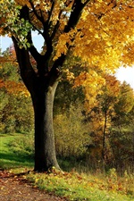 Preview iPhone wallpaper Autumn tree park
