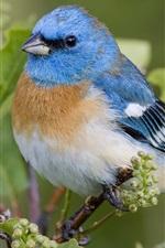 Preview iPhone wallpaper Beautiful blue bird