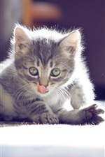 Gato curioso close-up
