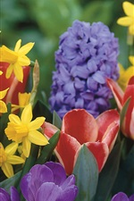 Preview iPhone wallpaper Daffodils tulips crocus hyacinth flowers