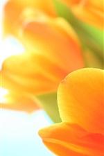 iPhone обои Цветы тюльпаны весной