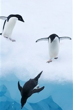Preview iPhone wallpaper Penguins ice snow water