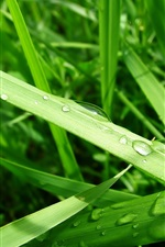 Preview iPhone wallpaper The dew on the green grass leaf