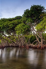 Preview iPhone wallpaper The mangrove forests of the lake scenery