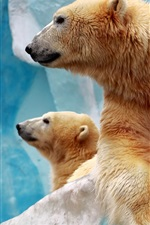 Preview iPhone wallpaper Two polar bears