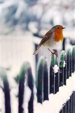 Preview iPhone wallpaper Winter bird snow fence