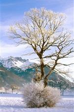 Winter snow mountain shrub tree forest