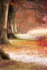 Preview iPhone wallpaper Autumn red maple forest
