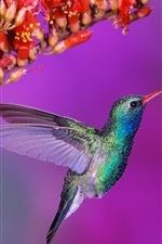 Preview iPhone wallpaper Beautiful birds hummingbird