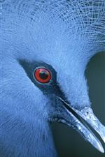iPhone обои Тело синей птицы