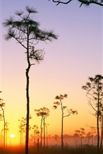 Preview iPhone wallpaper Brushwood swamp trees wilderness