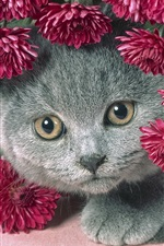Preview iPhone wallpaper Cat and flowers