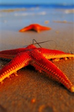 Preview iPhone wallpaper Evening beach starfish close-up