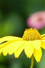 Preview iPhone wallpaper Flowers summer nature petals