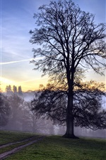Preview iPhone wallpaper Forest trees dawn mist