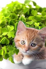 Preview iPhone wallpaper Green bonsai and cat