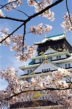 Preview iPhone wallpaper Landscape temple of spring flowers