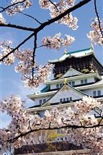 Пейзаж храм весенние цветы