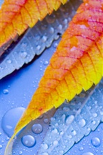 Preview iPhone wallpaper Macro leaf with water drops