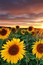 Preview iPhone wallpaper Magic Landscape, Sunflower Garden