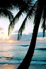 Preview iPhone wallpaper Ocean sunset palm trees