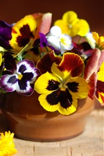 Preview iPhone wallpaper Pansy flowers and calendula