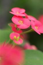 Pink flowers green leaves blur macro